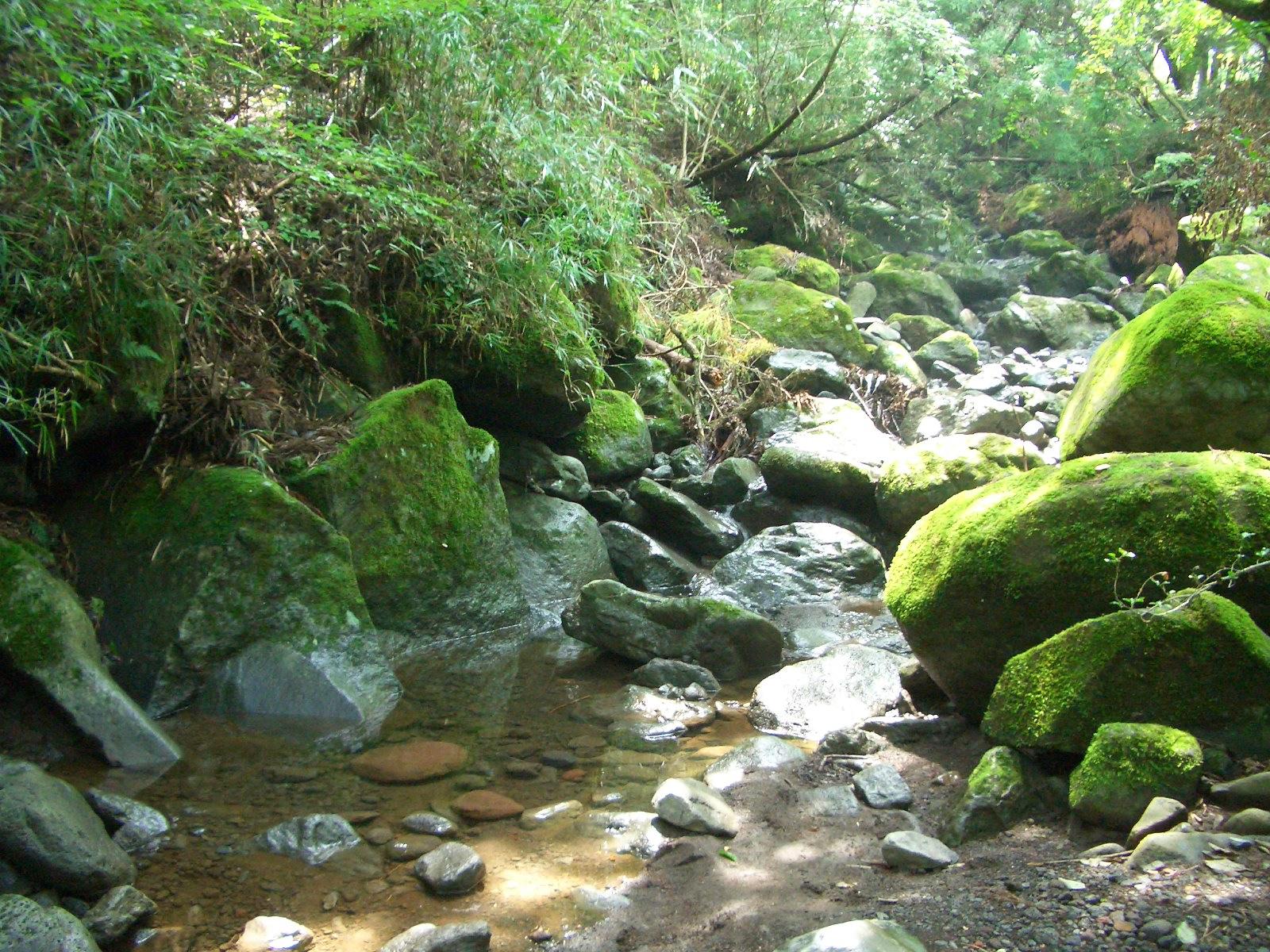 キャンプ場内を流れる川で探検